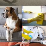 Whole Home Cleaning Extra Services